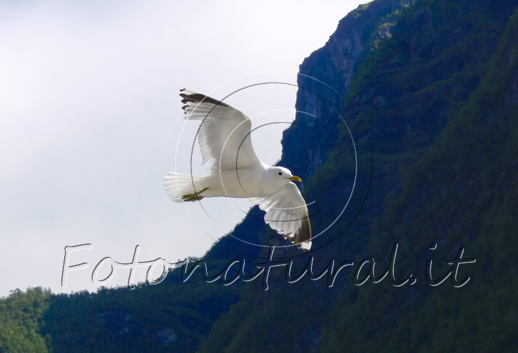 f5-seagull-in-flight
