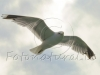 f4-seagull-looking